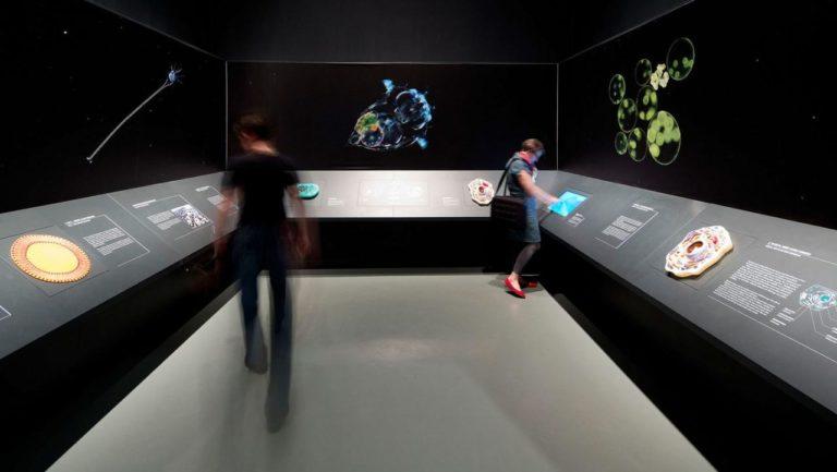 Interaktionstische-Projektionen-Darwineum